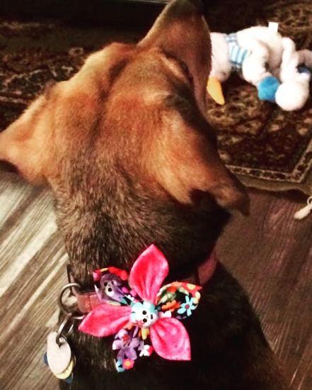 dog bow