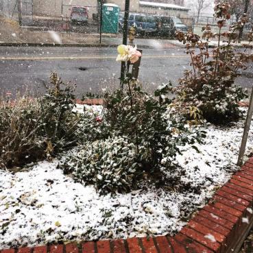 snow-co